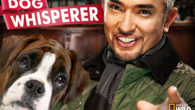 Cesar Millan - dog whisperer
