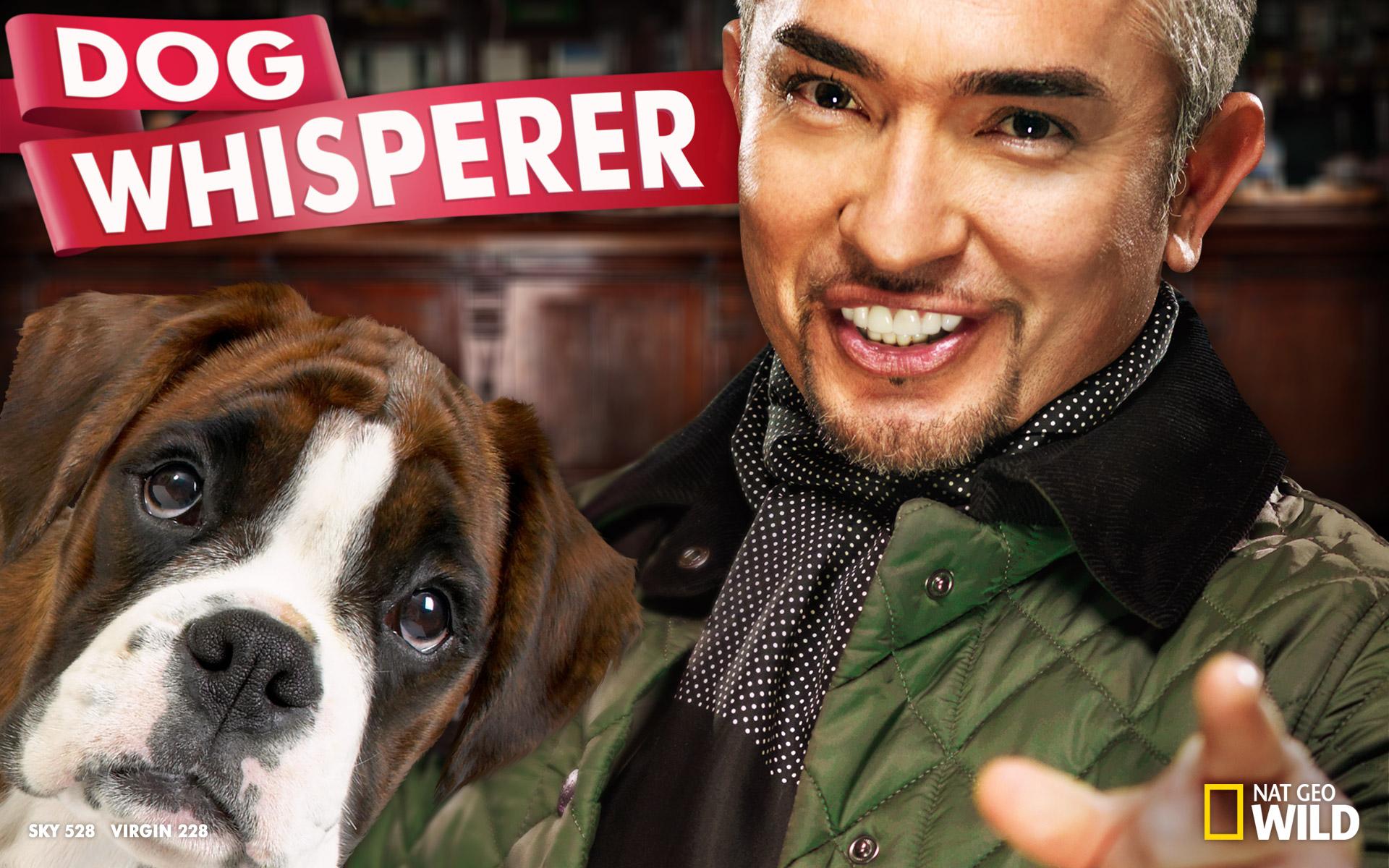 Cesar Millan - dog whisperer